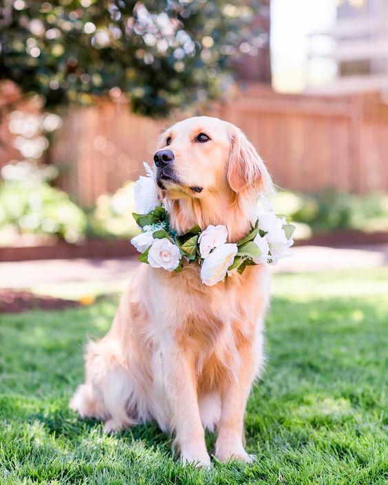 esküvői virágdekoráció, kutya esküvőn