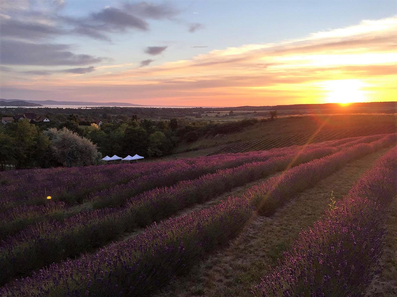 Esküvői helyszín a Balatonnál, Provence-i hangulatú esküvői helyszín a Balatonnál – A Kőröshegyi Levendulás 2021-től tárt karokkal várja a házasulandókat